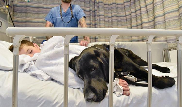 A bonita amizade entre um menino autista de 9 anos e o cão que não desgruda dele nem no hospital 1