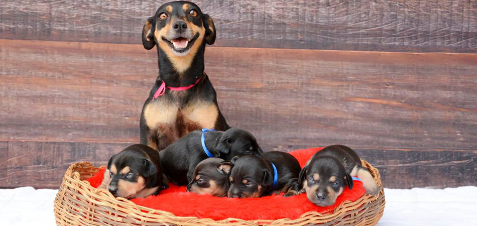 Depois de fotos incríveis grávida, Lilica agora exibe orgulhosa seus fofos filhotinhos em novo ensaio 2