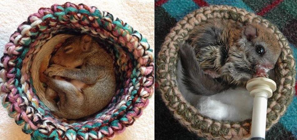 Voluntários fazem ninhos de crochê e ajudam centros de reabilitação de animais selvagens do mundo todo 1