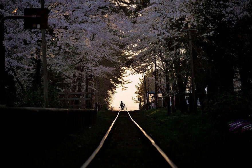 primavera-flores-cerezo-sakura-japon-national-geographic-1