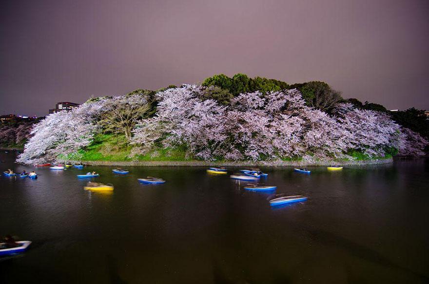 primavera-flores-cerezo-sakura-japon-national-geographic-10
