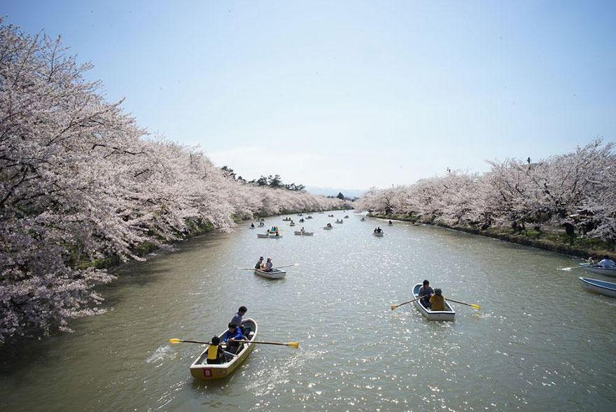 primavera-flores-cerezo-sakura-japon-national-geographic-15