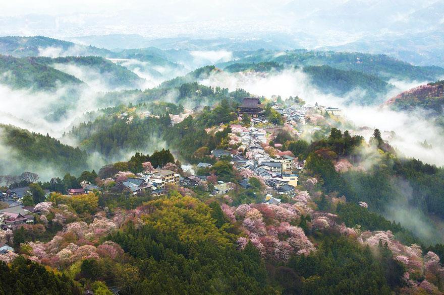 primavera-flores-cerezo-sakura-japon-national-geographic-16
