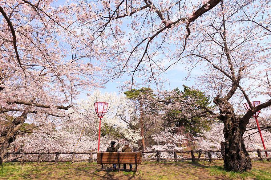 primavera-flores-cerezo-sakura-japon-national-geographic-7