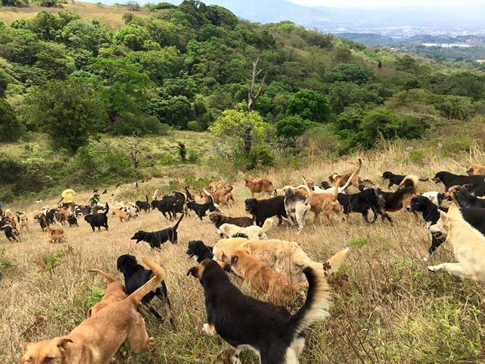 refugio-perros-mestizos-territorio-zaguates-costa-rica-1