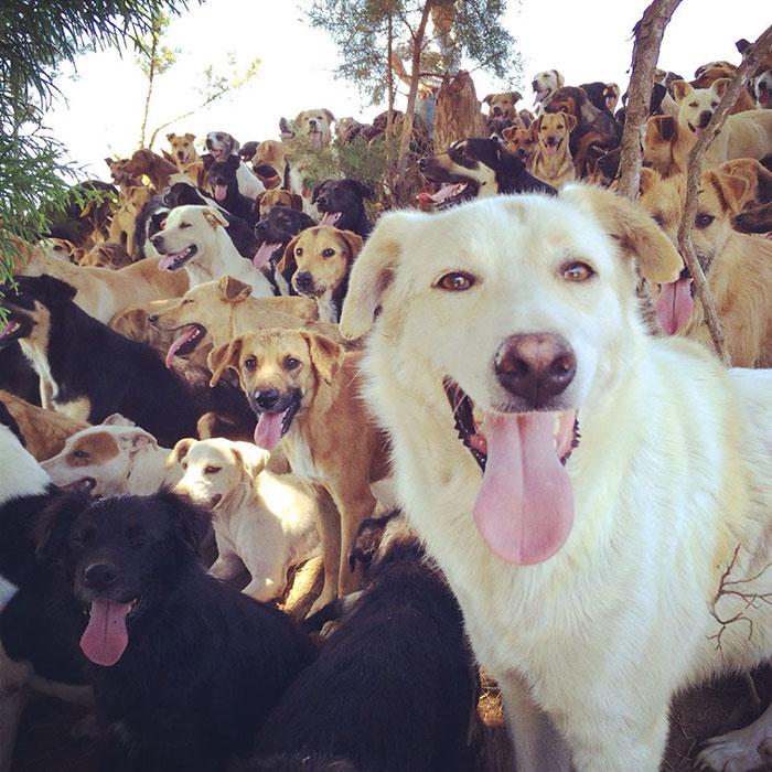 refugio-perros-mestizos-territorio-zaguates-costa-rica-3