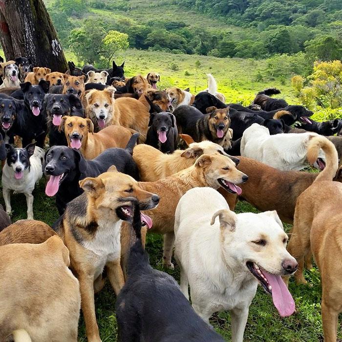 refugio-perros-mestizos-territorio-zaguates-costa-rica-5