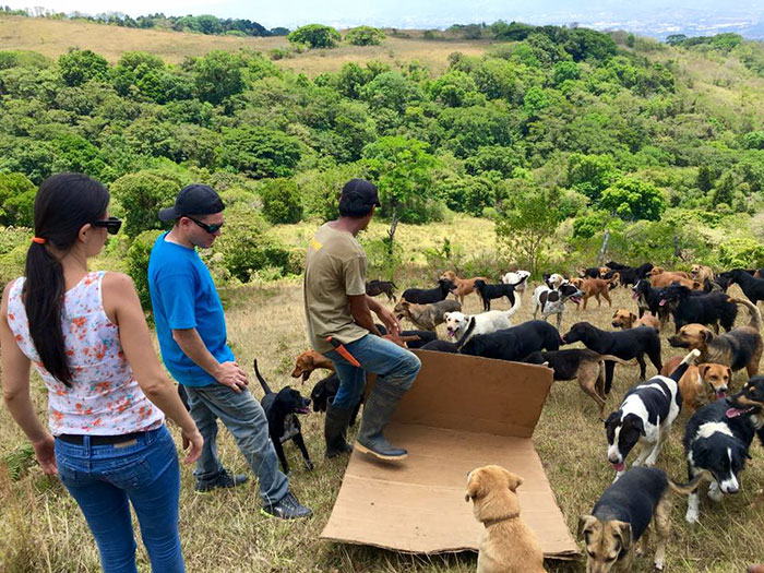 refugio-perros-mestizos-territorio-zaguates-costa-rica-6