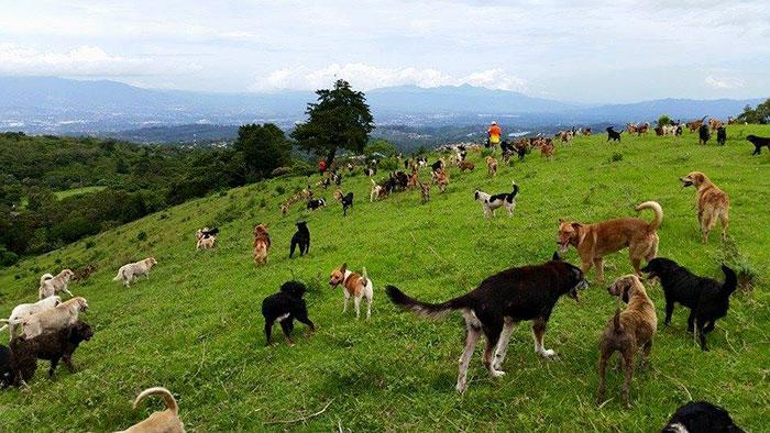 refugio-perros-mestizos-territorio-zaguates-costa-rica-7