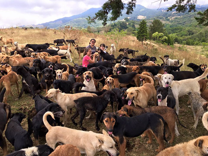 refugio-perros-mestizos-territorio-zaguates-costa-rica-8