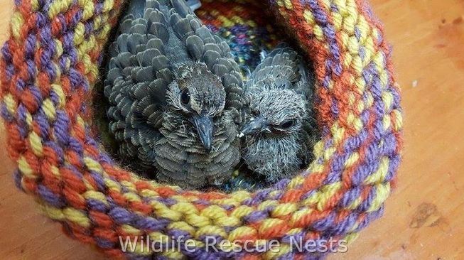 wildliferescuenests-bird1.jpg.653x0_q80_crop-smart