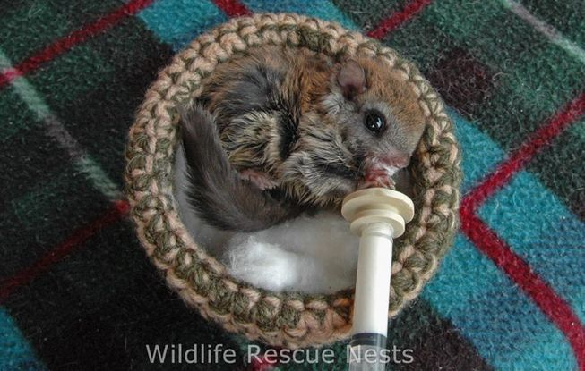 wildliferescuenests-cute.jpg.653x0_q80_crop-smart
