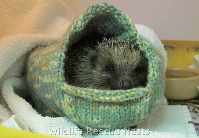wildliferescuenests-hedgehog0.jpg.653x0_q80_crop-smart
