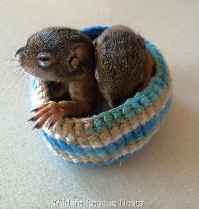 wildliferescuenests-squirrels1.jpg.653x0_q80_crop-smart