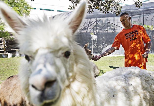 detentos cuidam de animais abandonados e ambos ganham uma nova chance9