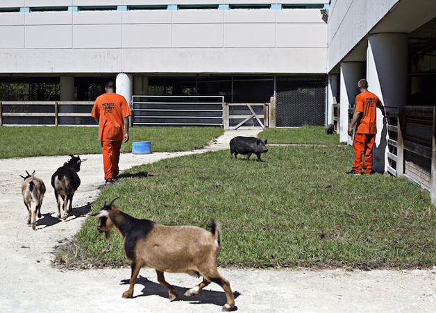 detentos cuidam de animais abandonados e ambos ganham uma nova chance10