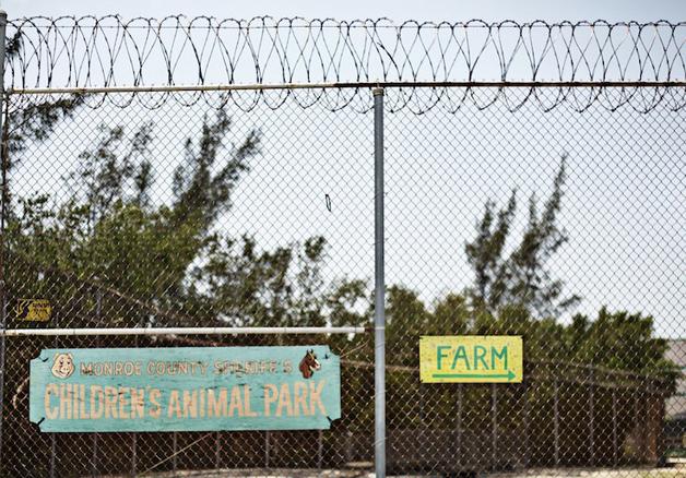 detentos cuidam de animais abandonados e ambos ganham uma nova chance11