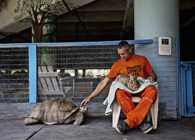 detentos cuidam de animais abandonados e ambos ganham uma nova chance12