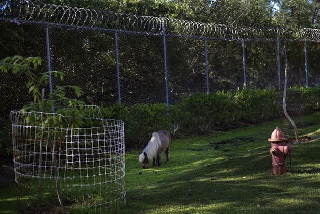 detentos cuidam de animais abandonados e ambos ganham uma nova chance13