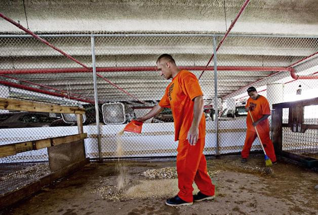 detentos cuidam de animais abandonados e ambos ganham uma nova chance15