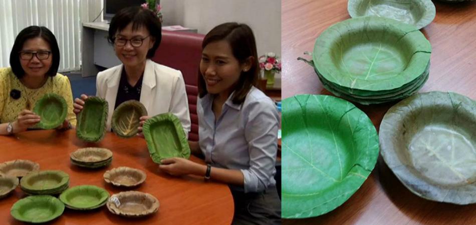 Universidade desenvolve pratos descartáveis feitos de folhas 2
