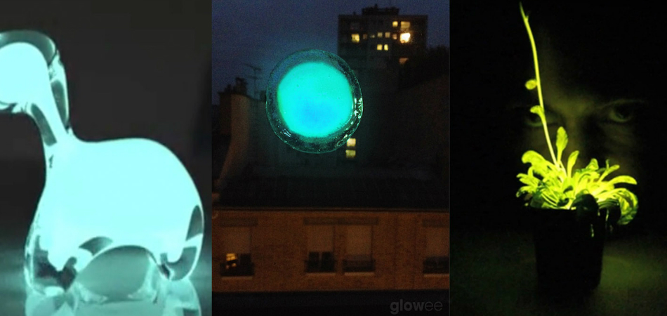 Como alternativa à energia elétrica e emissão de CO2, startup cria sistema com bactérias luminosas 8