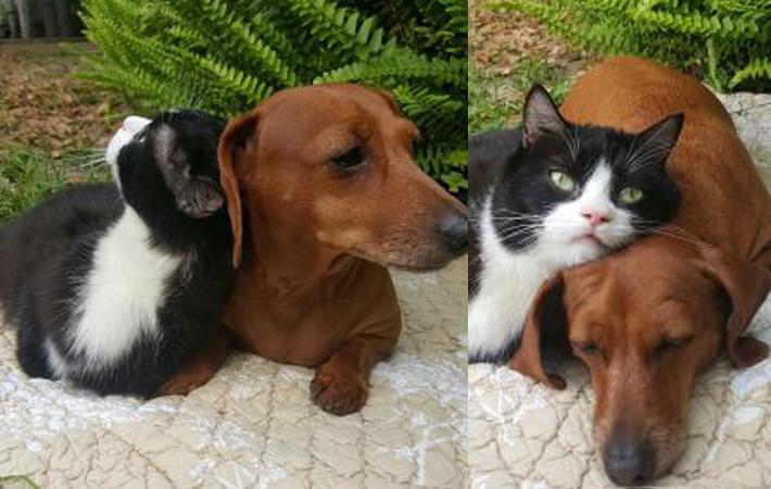 Cadela e gata com problemas de locomoção se tornam grandes amigas 1
