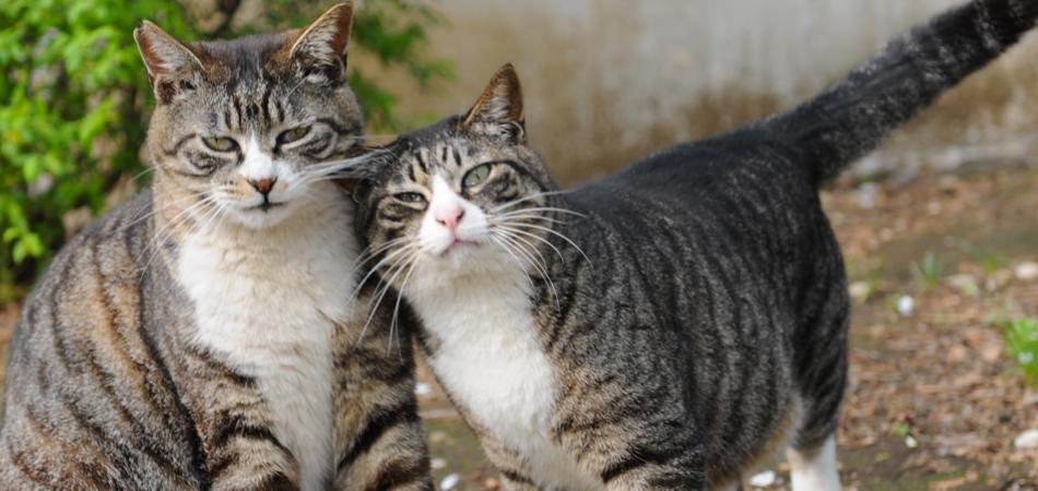 Suíça decreta lei que obriga a adoção de animais em pares 1