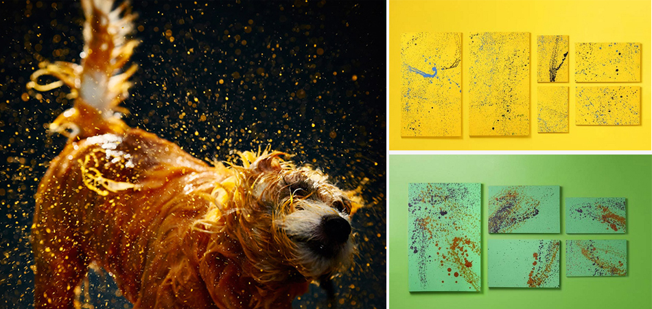 Vira-latas pintam quadros abstratos para incentivar a adoção de animais abandonados 2
