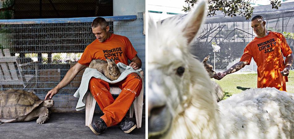 detentos cuidam de animais abandonados