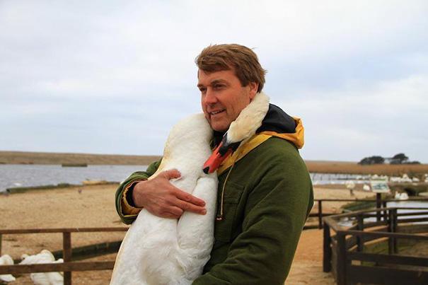 cisne-herido-abrazo-cuello-rescatador-richard-wiese-2