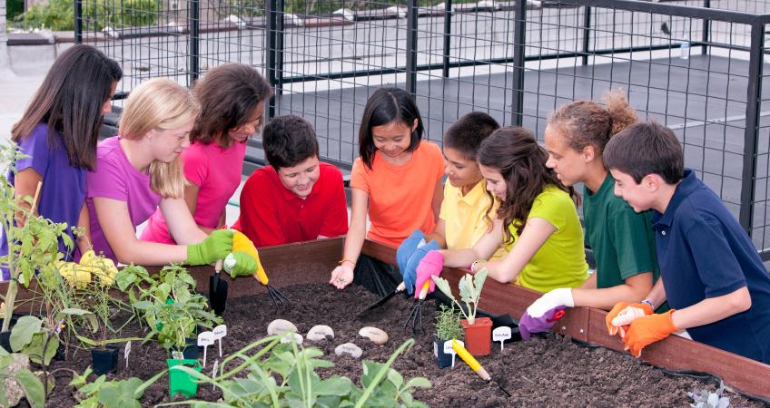 Projeto de lei quer tornar educação ambiental disciplina obrigatória na escola 1