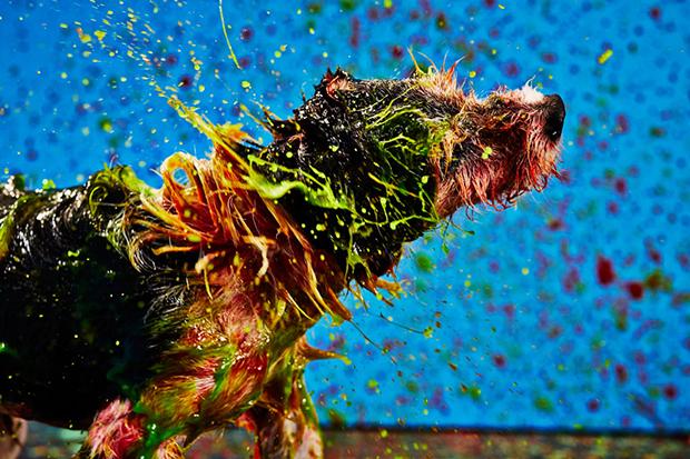 follow-the-colours-canismo-arte-vira-latas-01