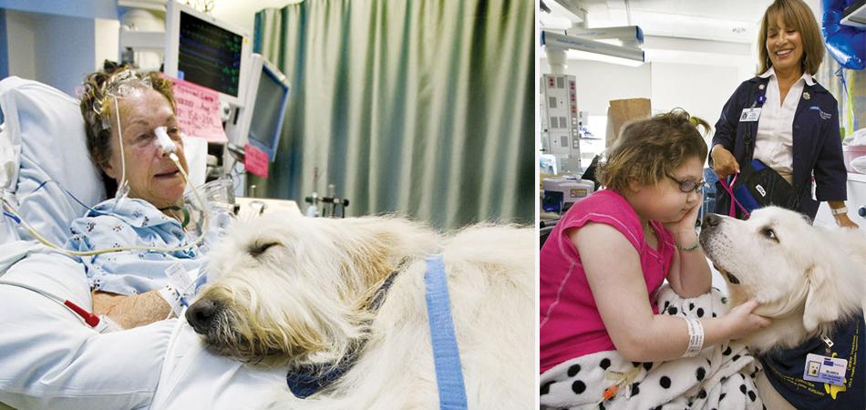 Hospital permite que animais de estimação visitem seus donos doentes 2