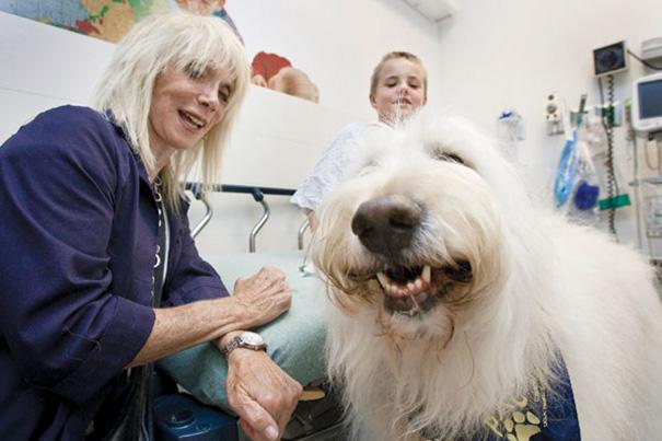 mascotas-visita-pacientes-enfermos-hospital-juravinski-canada-1