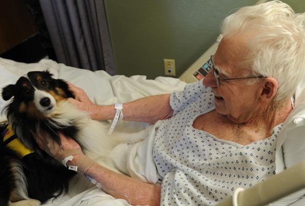 mascotas-visita-pacientes-enfermos-hospital-juravinski-canada-6