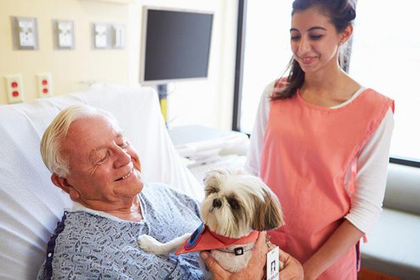 mascotas-visita-pacientes-enfermos-hospital-juravinski-canada-7