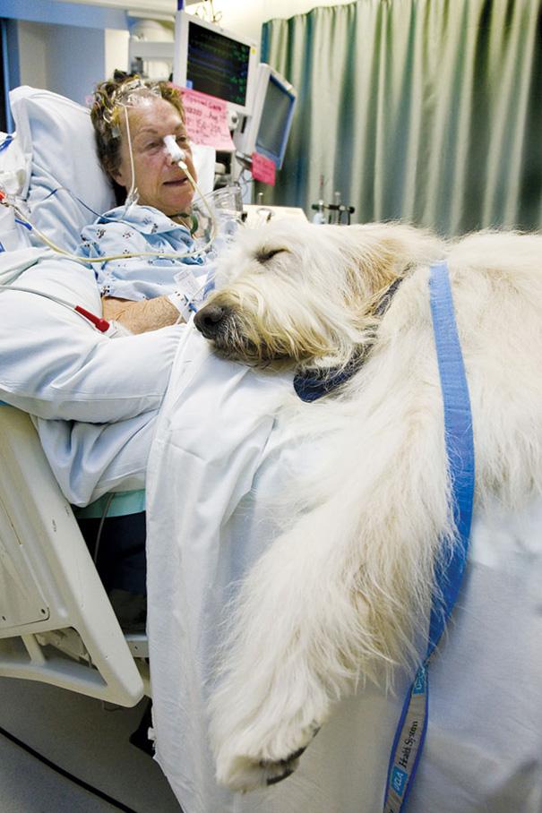 mascotas-visita-pacientes-enfermos-hospital-juravinski-canada-8