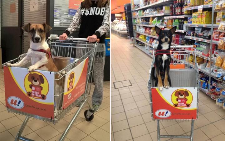 Dono de supermercado cria carrinho para que cachorros possam acompanhar seus donos nas compras 2