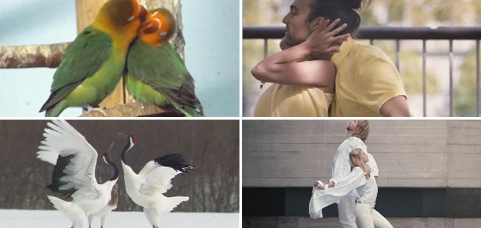 Humanos reproduzem as danças de sedução que os animais fazem na natureza 1