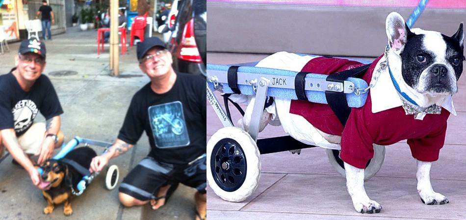 Há 20 anos, estes irmãos gêmeos criam cadeirinhas de rodas para animais que precisam 4