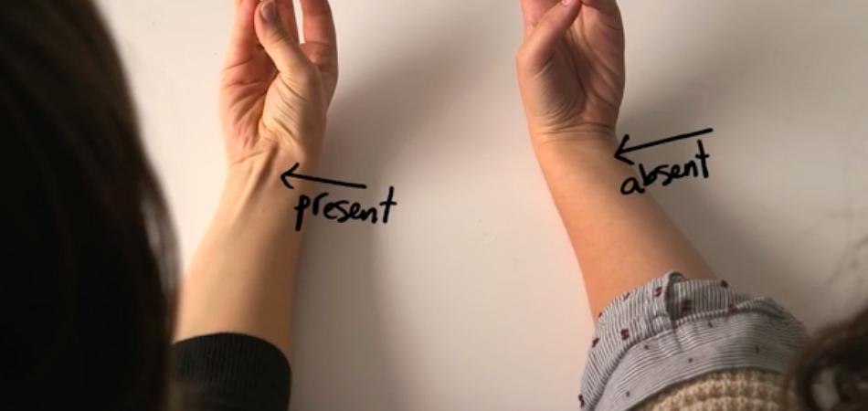 Vídeo curioso mostra a evolução do corpo humano e nossas profundas ligações com outros seres 1