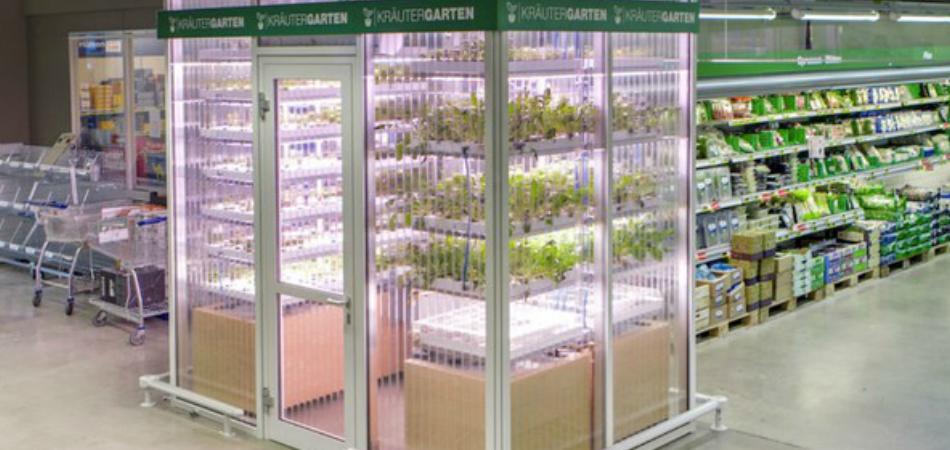 Neste supermercado, eles plantam no meio do corredor o que você colhe e compra 3