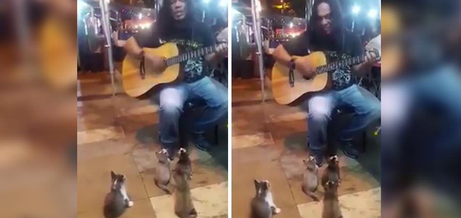 Músico canta para platéia fofa de 4 gatinhos 1