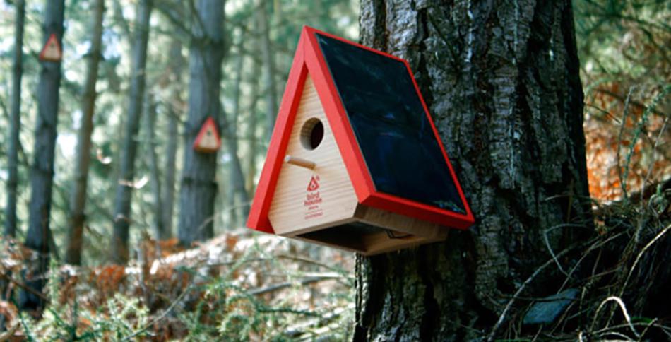 Casas de passarinho inteligentes avisam quando há focos de incêndio na floresta 2