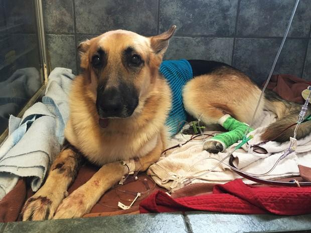 Cão salva menina de 7 anos de ataque de cascavel 2