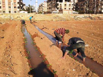 Em guerra, Síria aposta em hortas urbanas para conseguir alimentar população 7