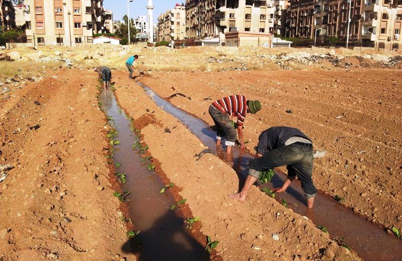 Em guerra, Síria aposta em hortas urbanas para conseguir alimentar população 2