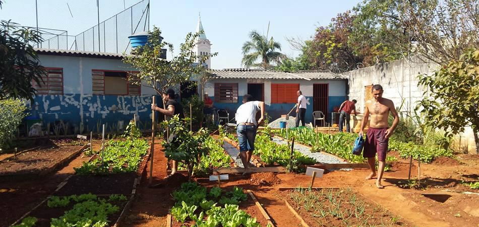 Abrigo em SP oferece horta comunitária e ensino para moradores de rua 1