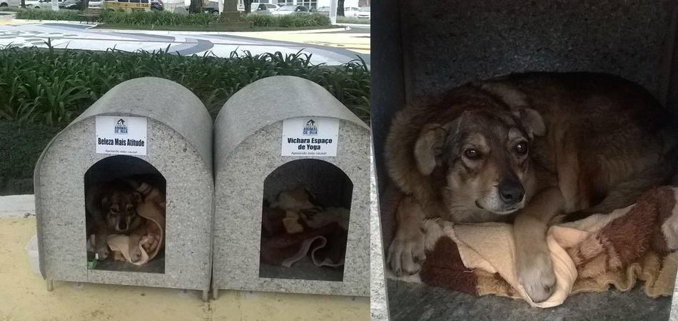 Projeto em Lages (SC) instala casinhas para animais de rua 1